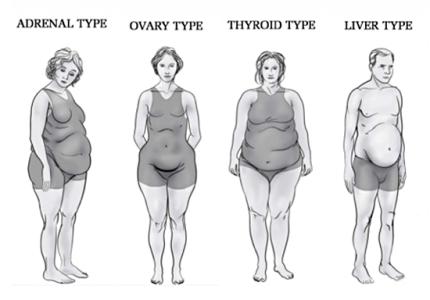 Four Body Types